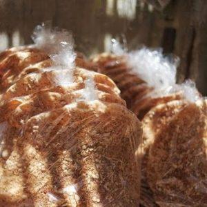 Bánh đa Kế Bắc Giang