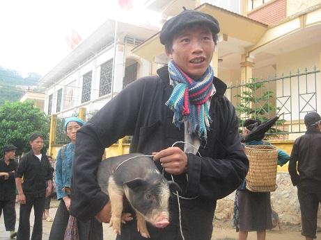 lợn mán